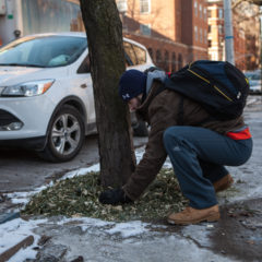 Winter Tree Care Tips!
