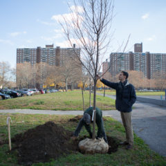 Greening the Bronx